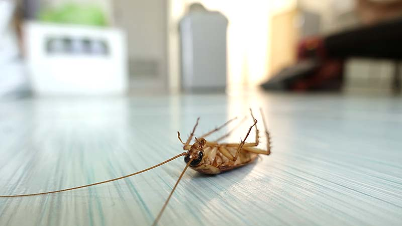 Why Pest Control Is Essential For Your Home