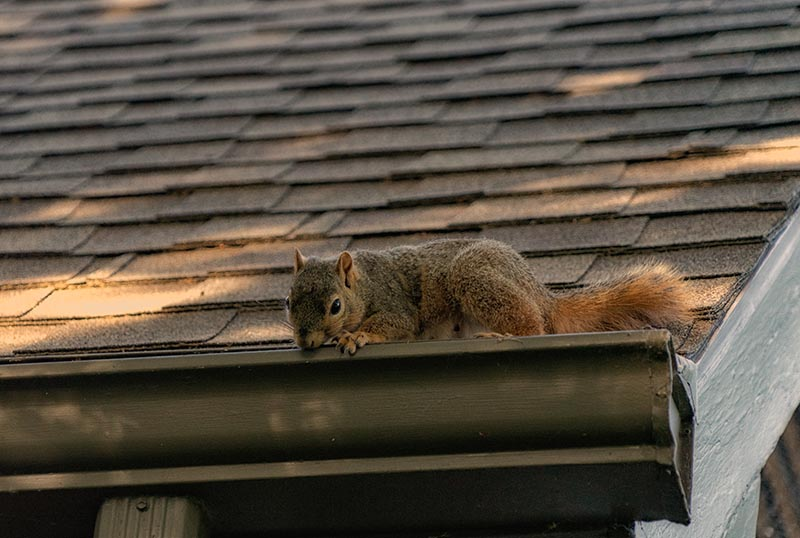 Warning Signs That There are Rodents In Your Home