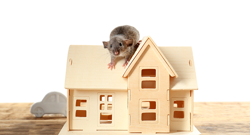 3 Common Questions About The Rodents In Your Home