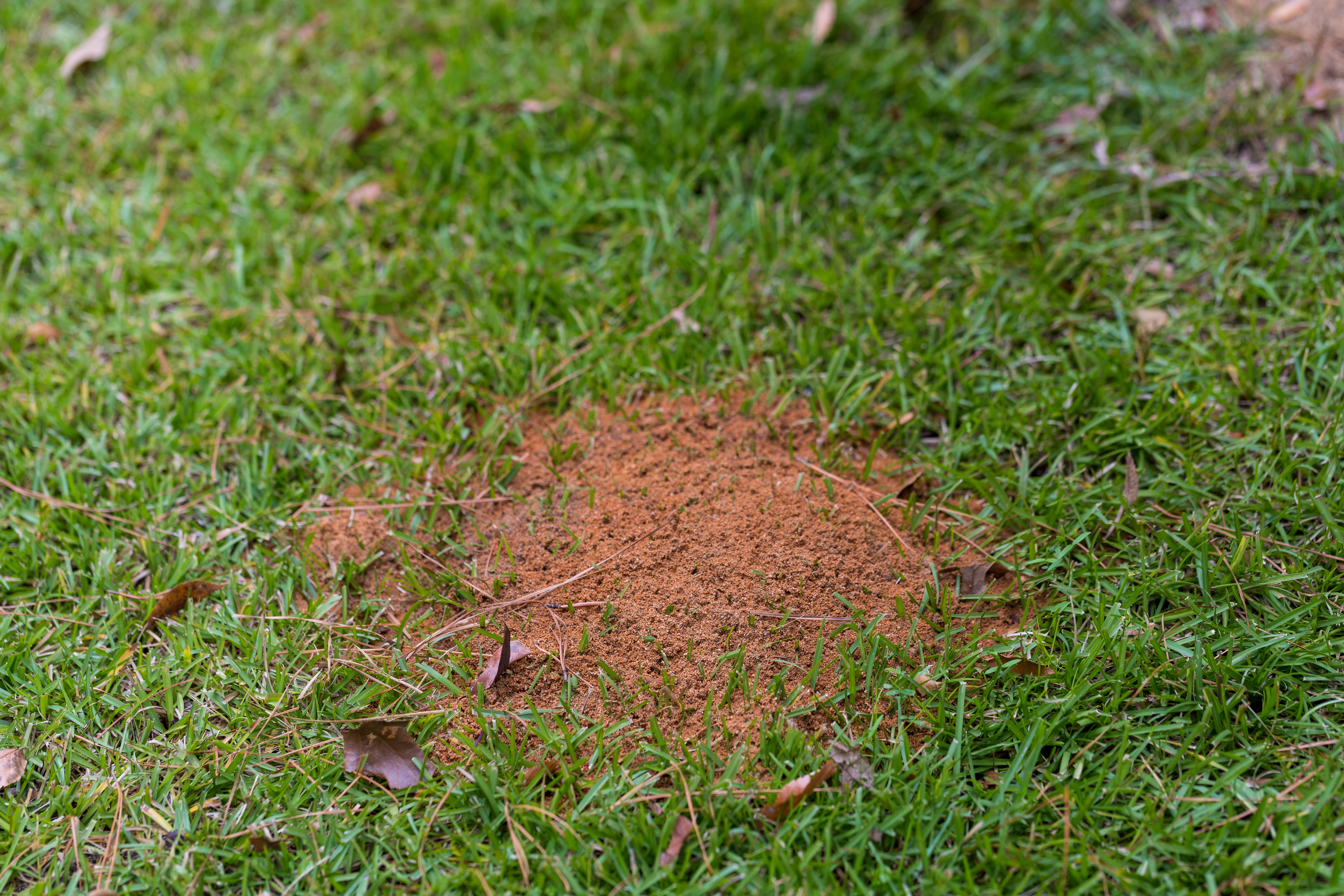 Identifying and Defeating Fire Ants
