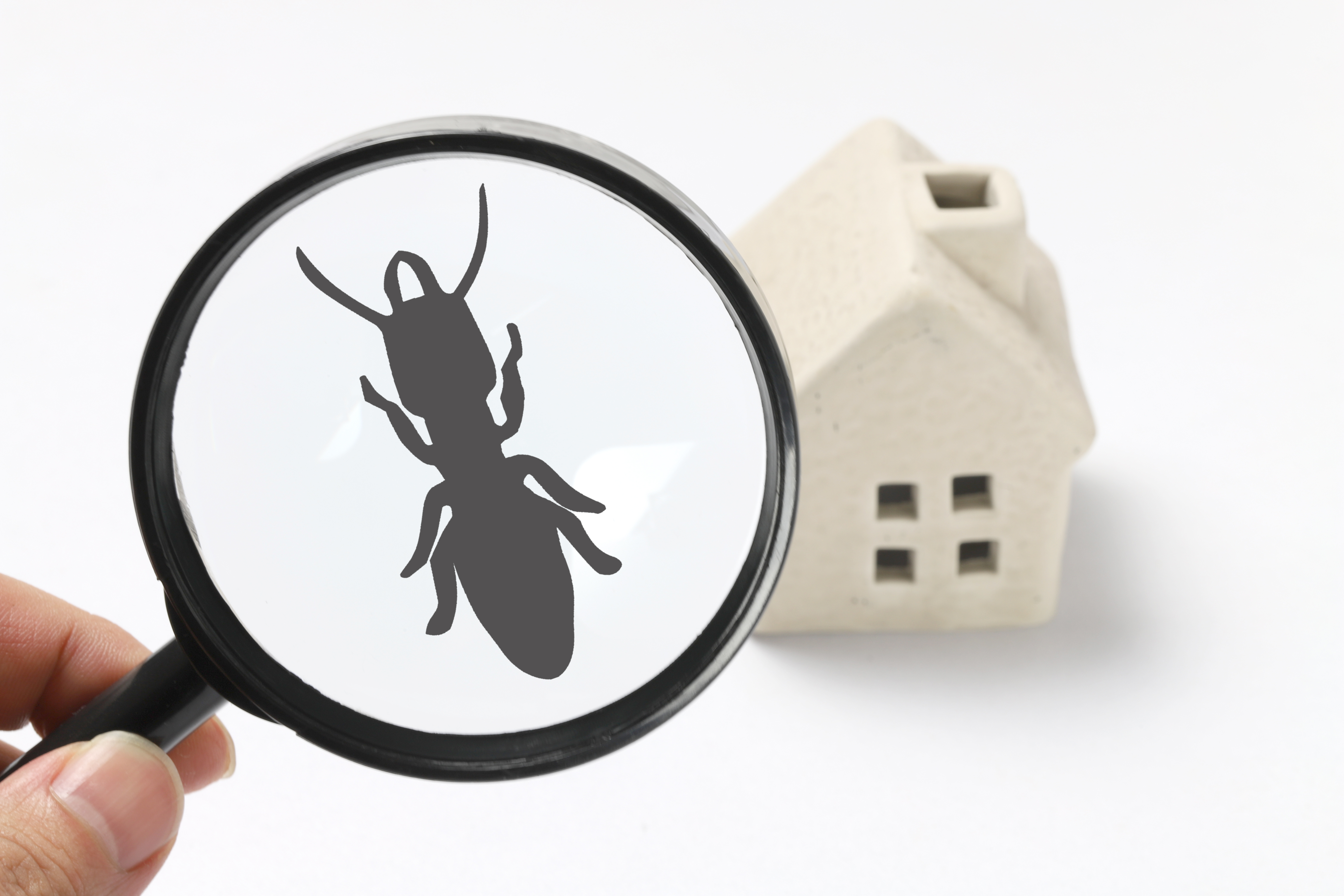 Four Signs You May Have Termites In Your Home