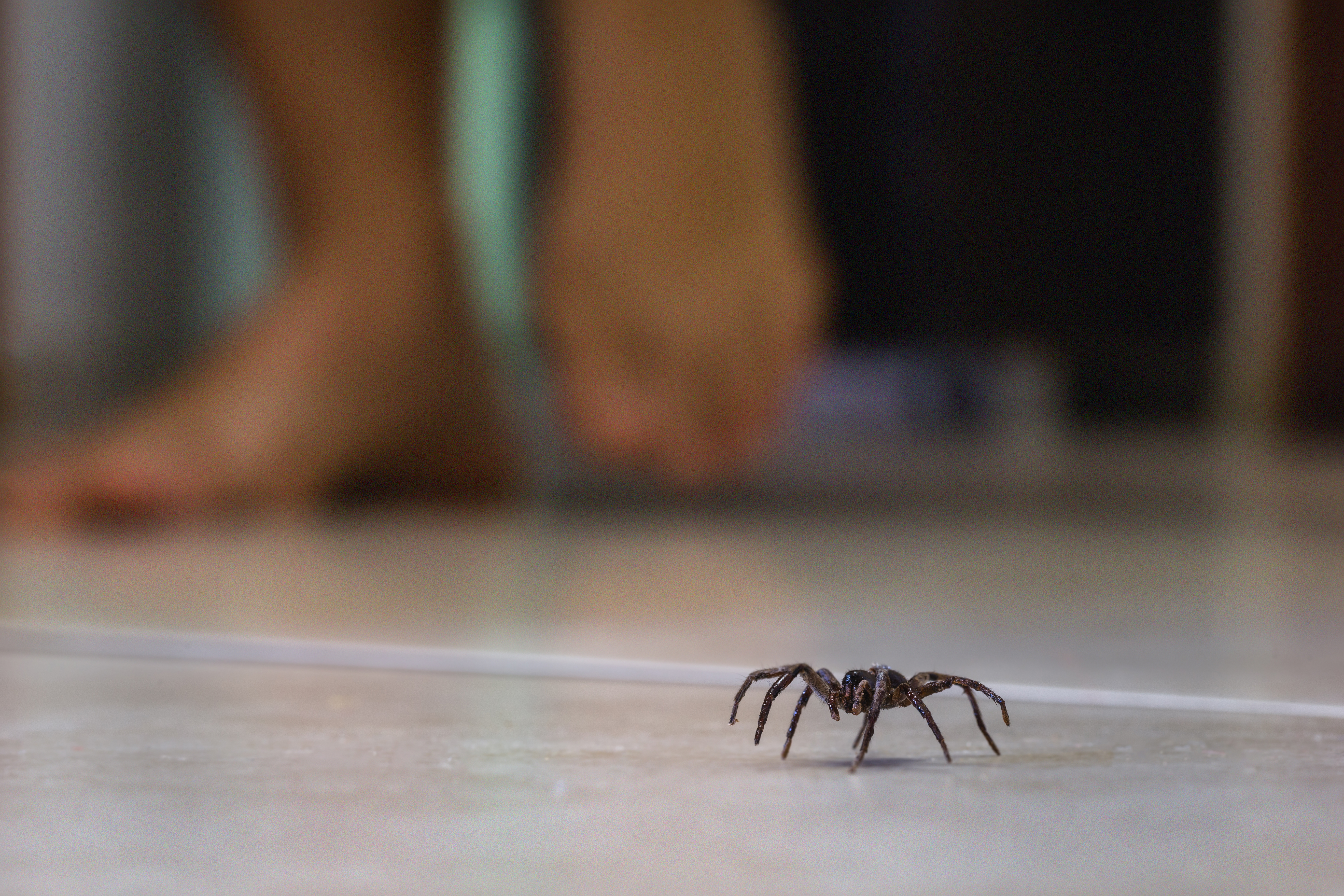 Why a Rise in House Spiders Means a Need For Pest Control