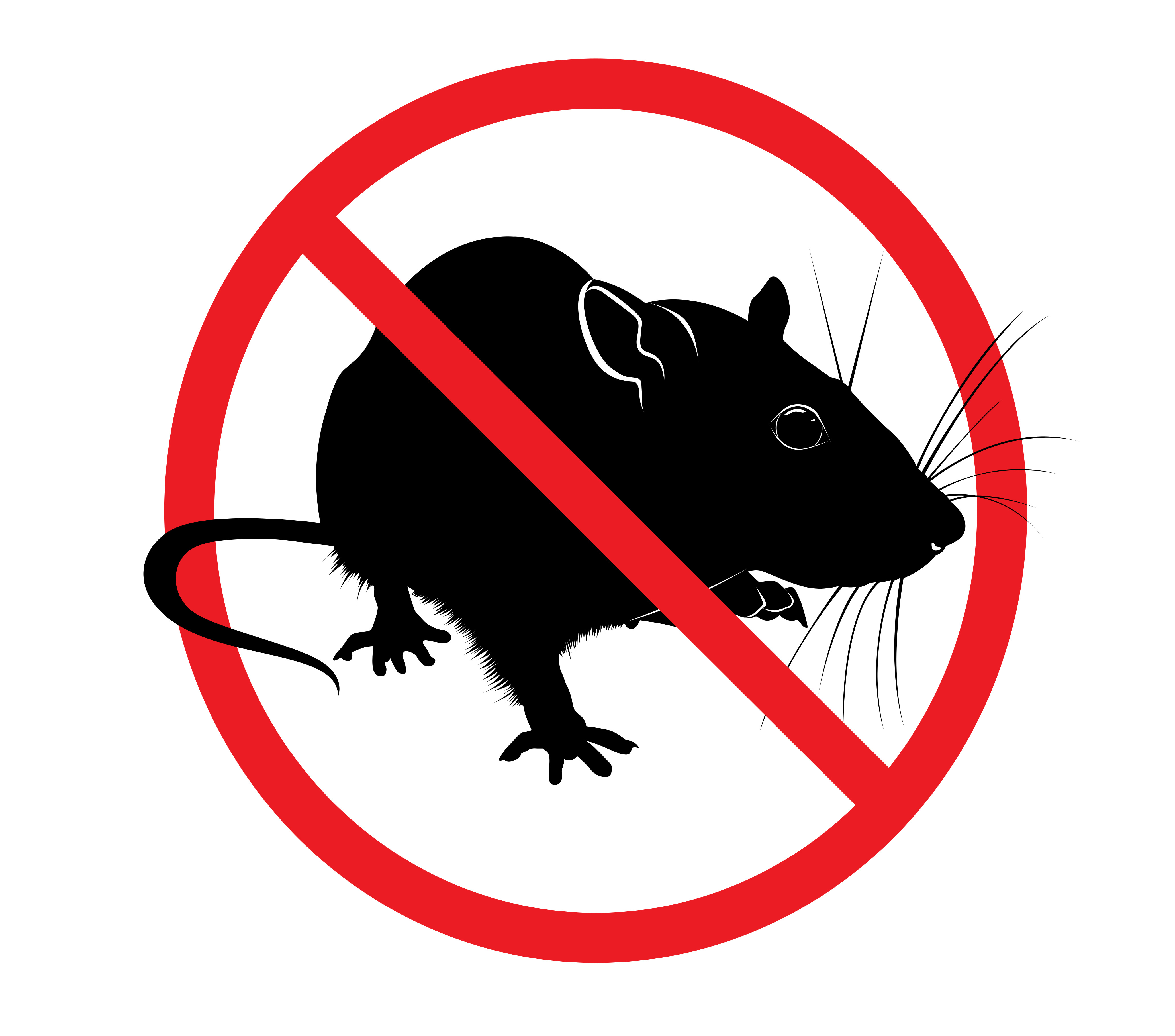 Rat Control And Removal: What You Need To Know
