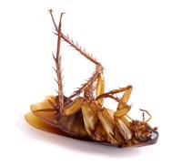 dallas cockroach control