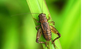 dallas cricket pest control
