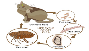 dallas flea control professionals