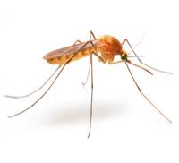 dallas mosquito pest control