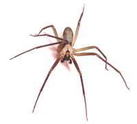 dallas county spider pest control