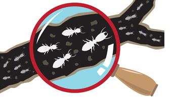 dallas subterranean termite pest control