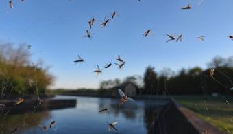 mosquito removal dallas