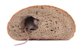 dallas mouse control