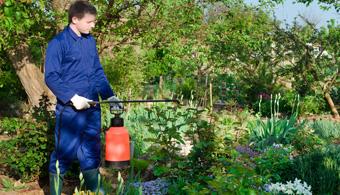 safe chigger pest control dallas