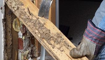 subterranean termite wood damage