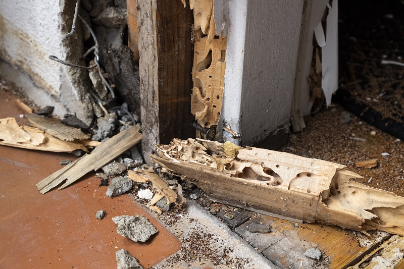 3 Reasons To Consider A Termite Protection Plan In Dallas