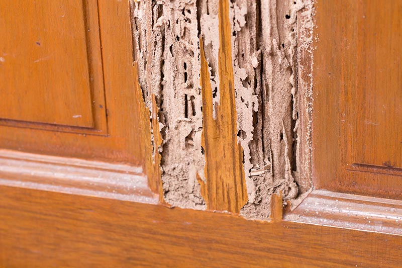3 Termite Control Methods to Protect your Home and Belongings